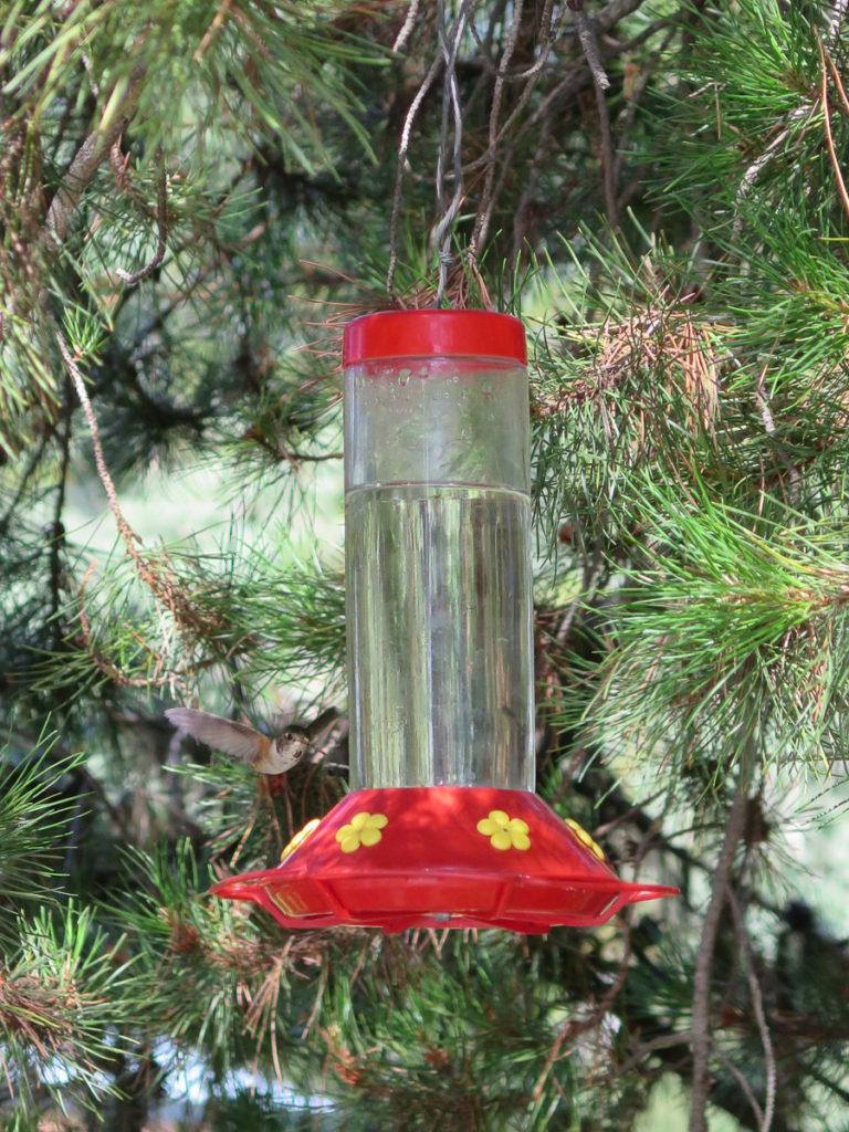 Kolibri beim Futterhaus