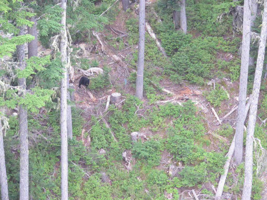 Foto von einem Bär im Wald