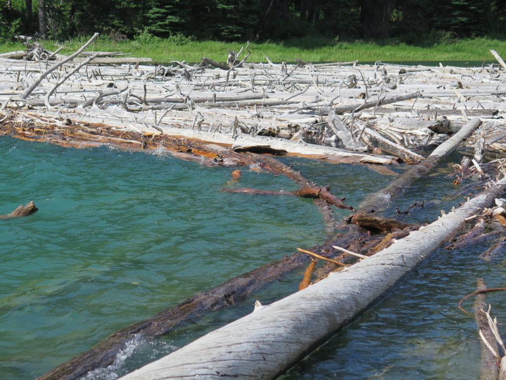 Treibholz im Fluss Kanada