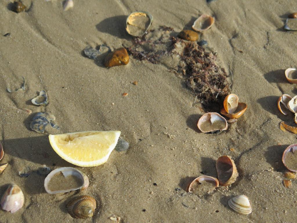 Auf dem Strand liegen Muscheln und ein Zitronenviertel