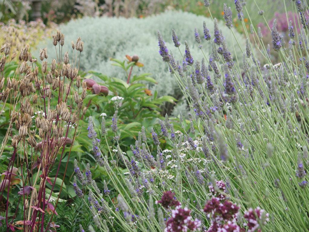 Barockgarten im Tudor House mit Lavendel und andere Kräuter und Blumen