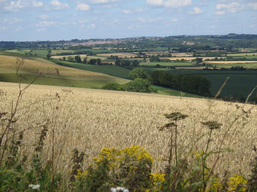 Landschaft England im Sommer