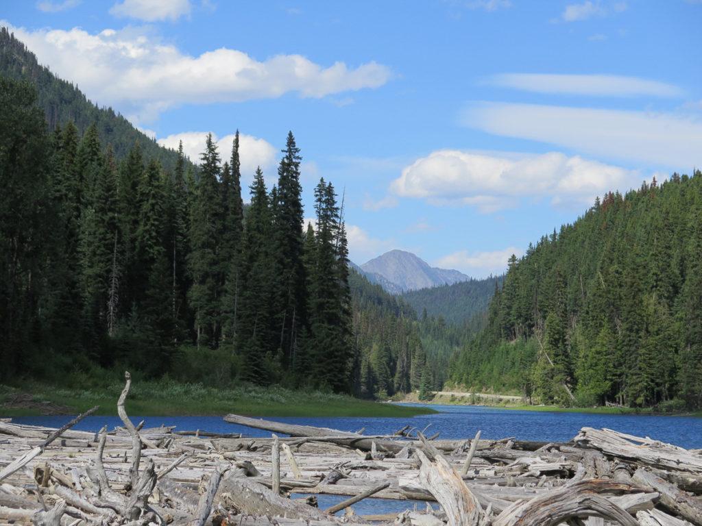 Fluss Kanada, Treibholz imm Vordergrund, Wald seitlich