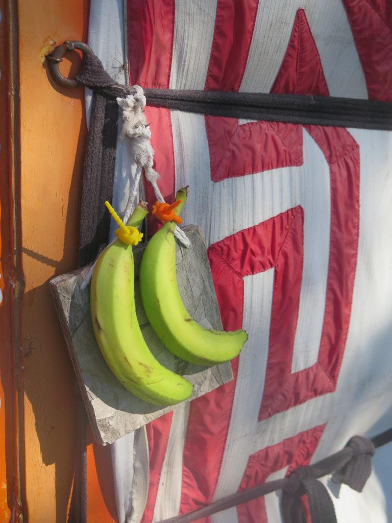 Bananen an eine Jurte gebunden