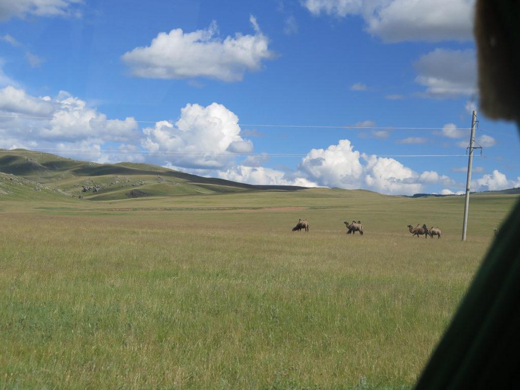 Kamelen auf grüne Fläche in der Mongolei, blauer Himmel und weiße Wolken