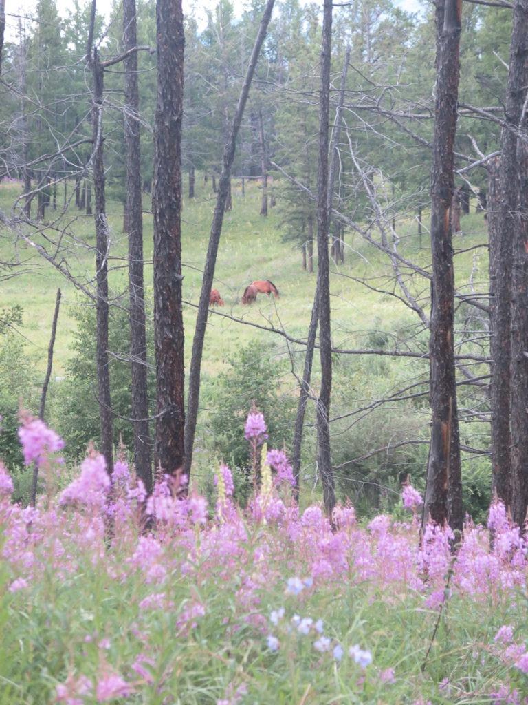 lila Feldblumen im Fordergrund, zwischen den Bäumen stehen Pferde