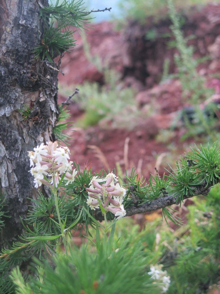 weiße Blümchen im Wald