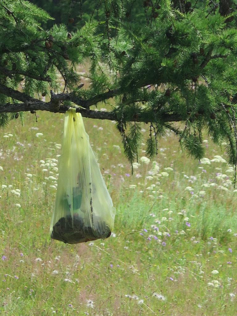 Innereien die in eine Plastiktüte am Baum hängen mit viele Fliegen drin