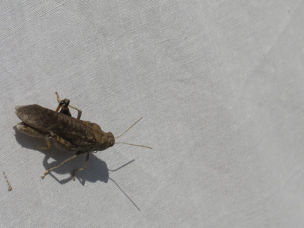 Insekt in der Mongolei