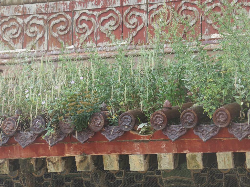 Pflanzen wachsen aus dem Dach vom Kloster Amarbayasgalant