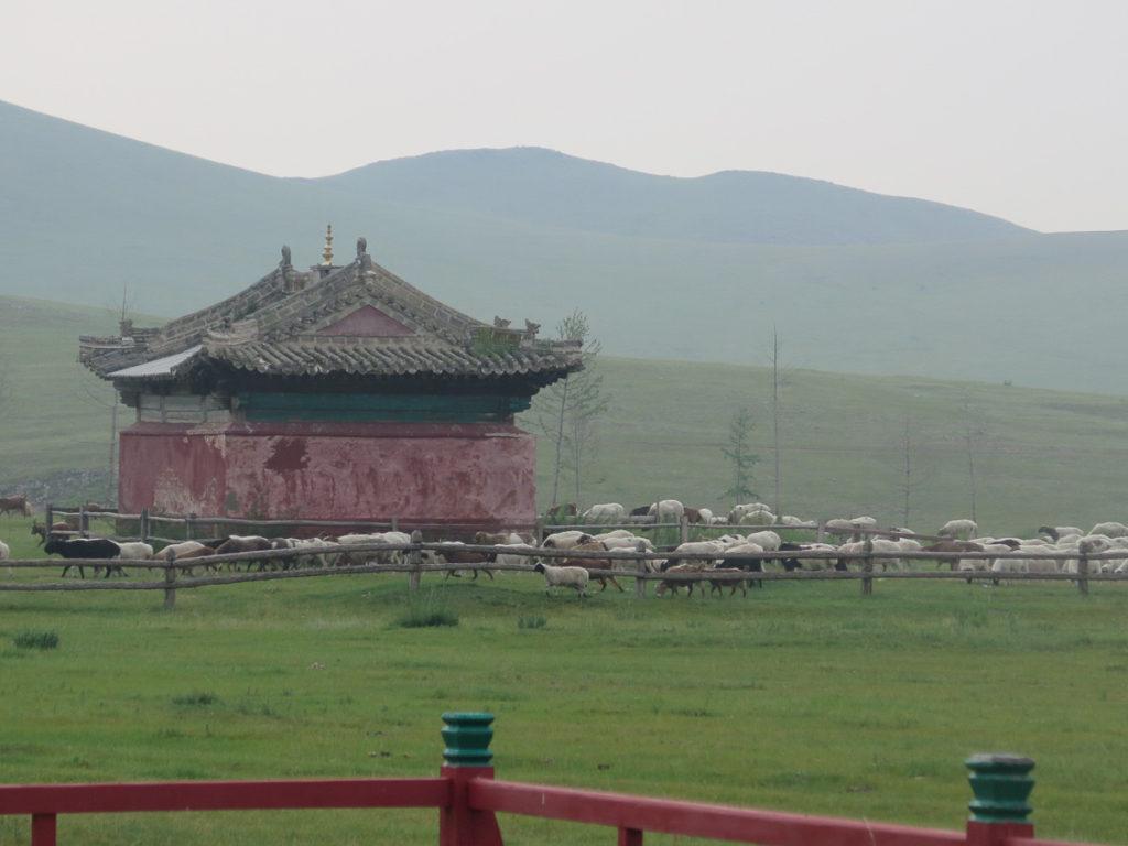 Kloster Amarbayasgalant mit Schafe