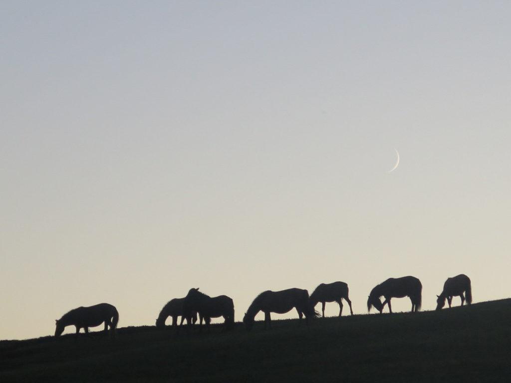 Pferde in der Dämmerung mit Mond