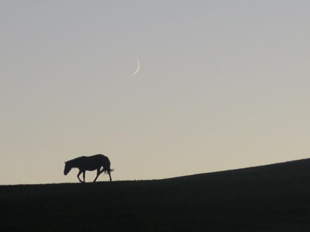 Pferd in der Dämmerung mit Mond