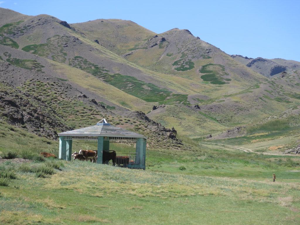 Kühe im Schatten vom Pavillion in grüner Berglandschaft Geierschlucht