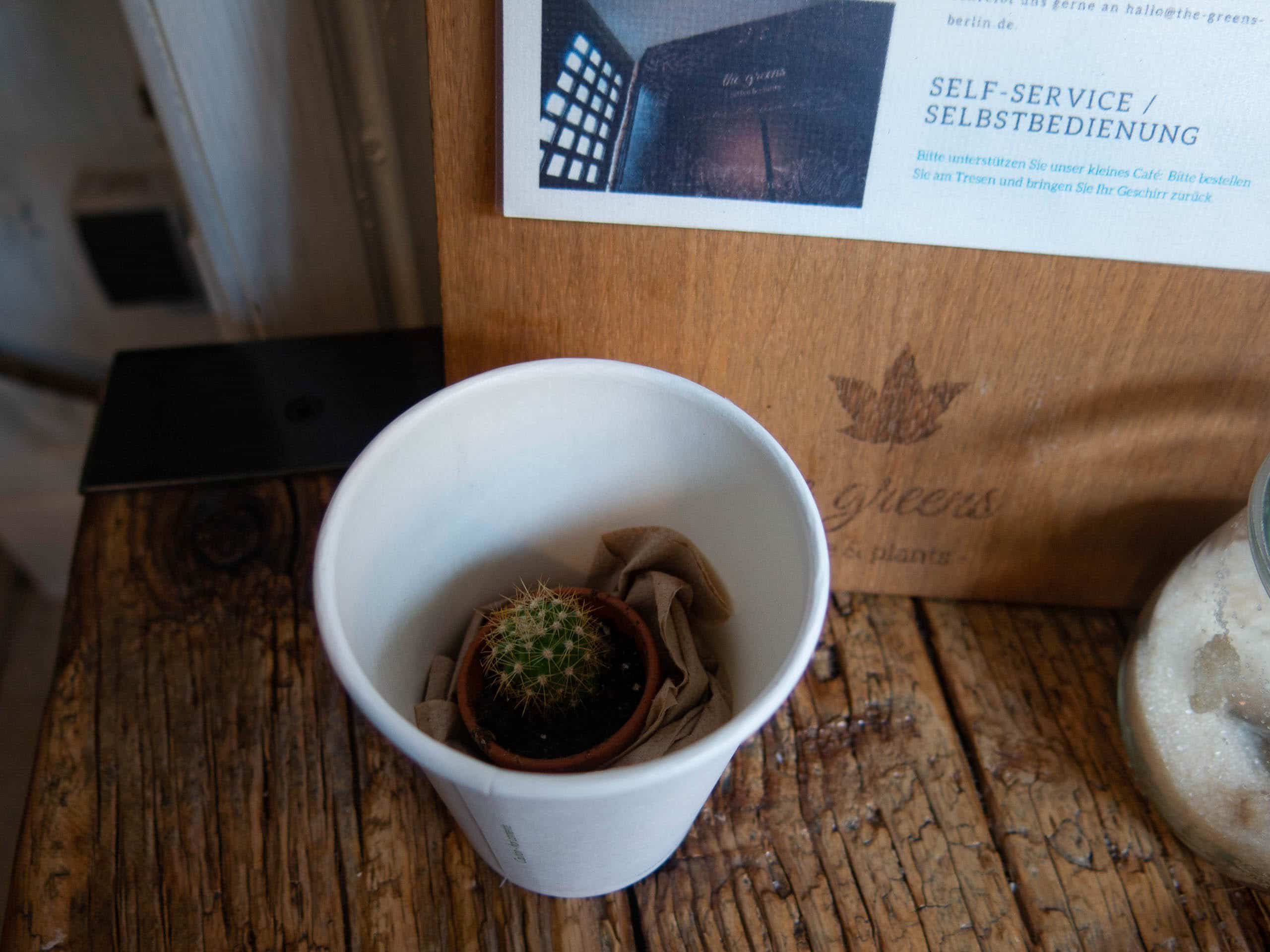 Kaktus im Pappkaffeebecher auf Holztisch