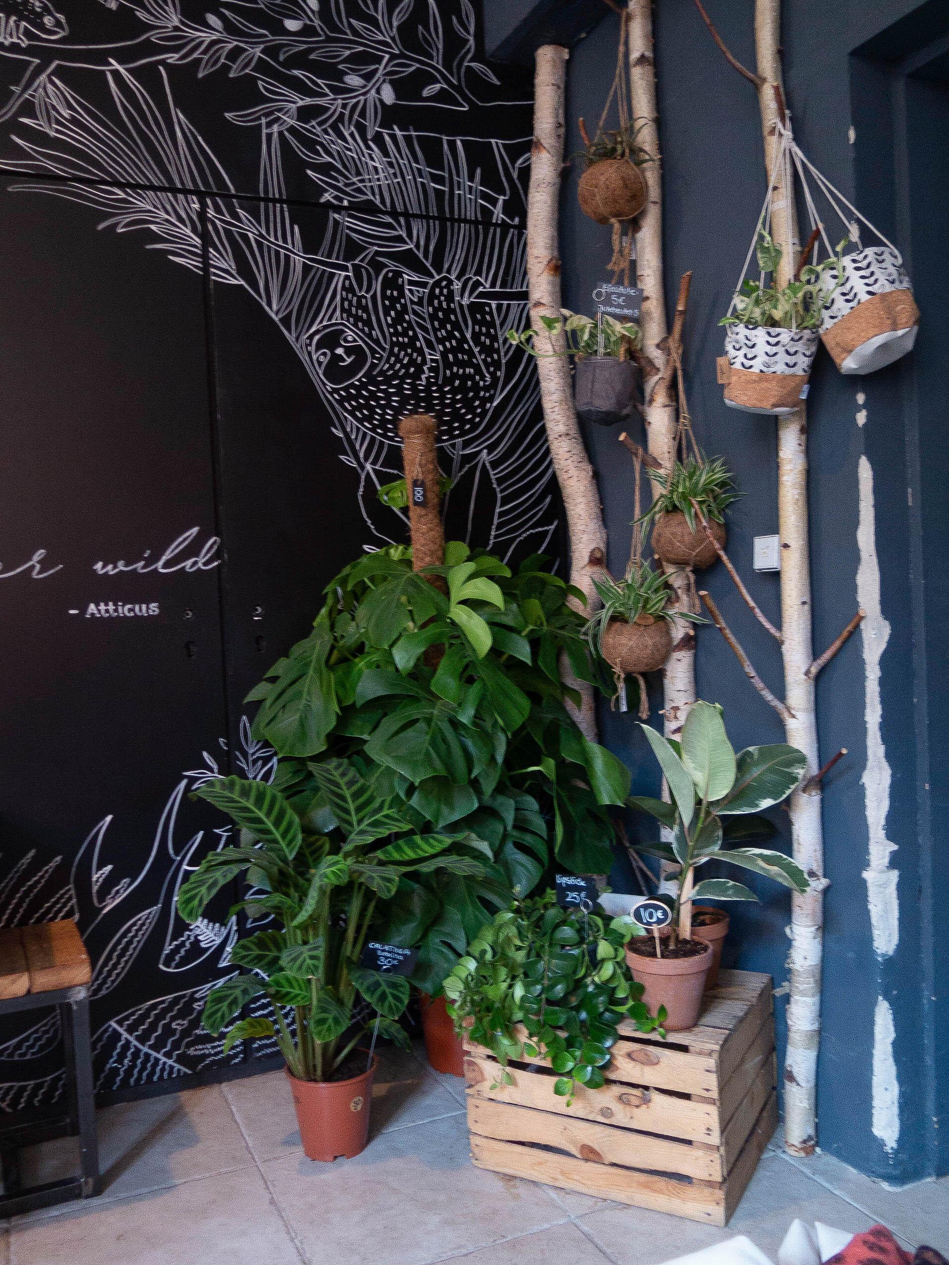 Grüne Pflanzen gegen dunkelblaue Mauer, auf eine Holzkiste