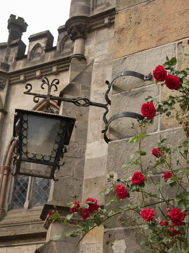 Rote Rose und Lanterne Burg Bentheim