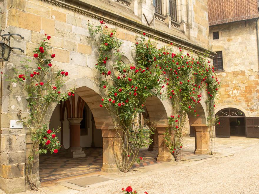 Rote Rosen Ranken an Burg Bentheim hoch