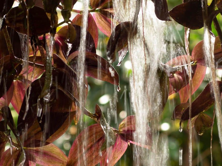 Wasser fliesst runter an rote Hängepflanzen