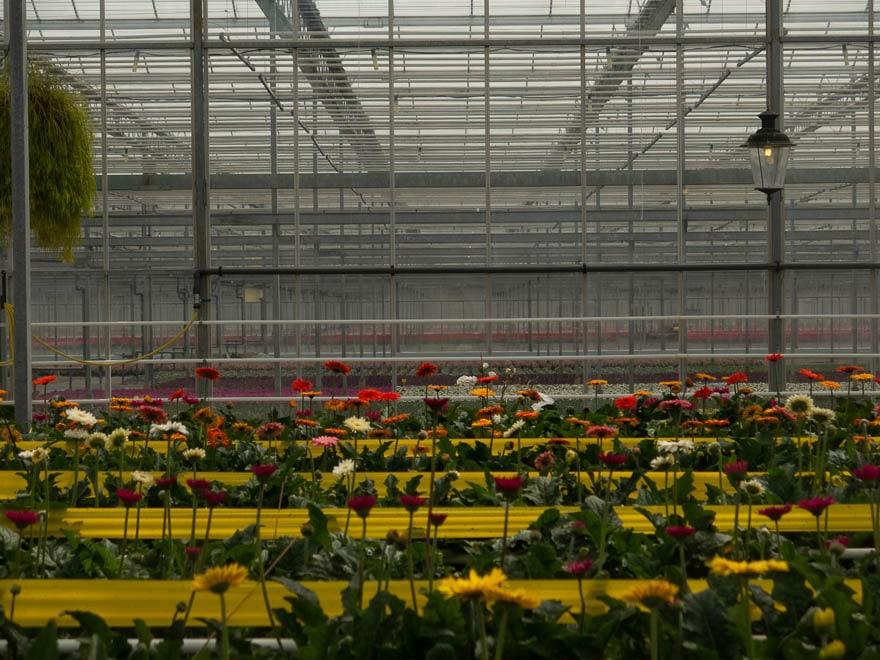 Gewächshaus mit Blumen in verschiedene Farben