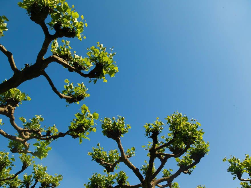 Zweige vor blauer Himmel