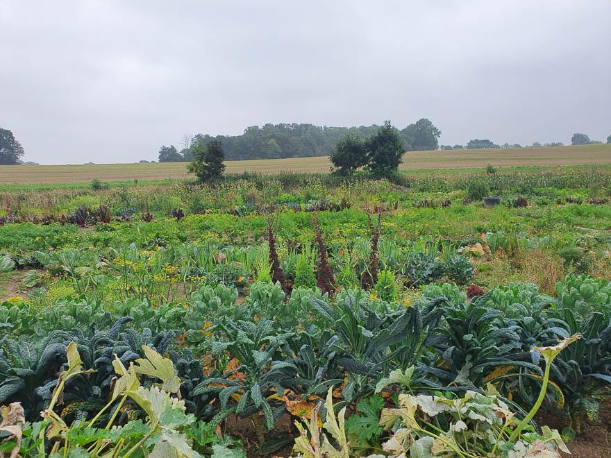 Übersichtsfoto Gemüseacker