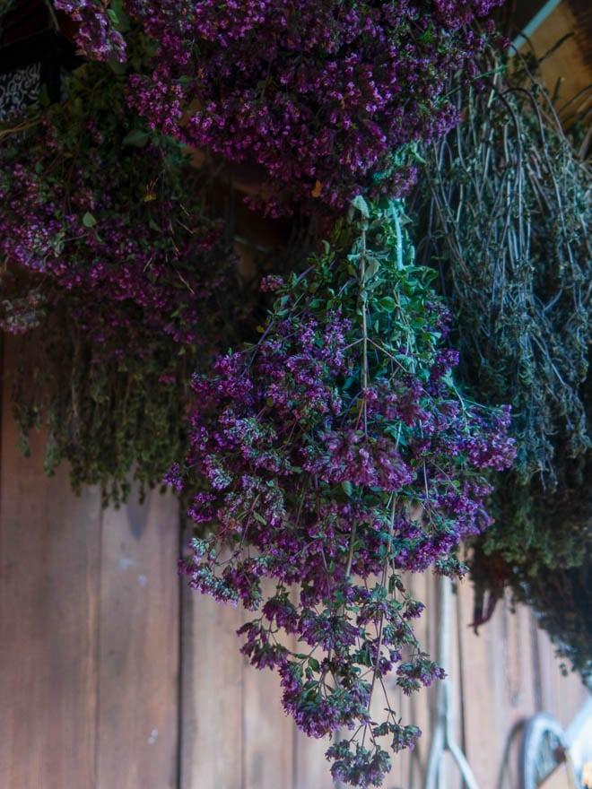 Lilafarbene Kräuter die zum Trocknen hängen