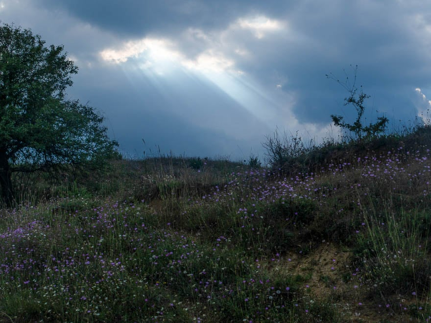 Wiese mit lilafabernen Blumen, dunkler Himmel wo die Sonne durchkommt