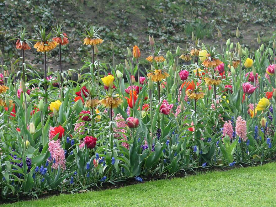 Gemischtes Beet mit ua Tulpen und Kaiserskrone
