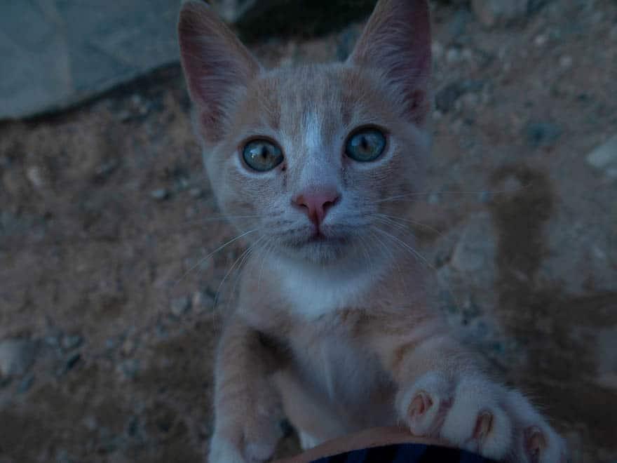 junge rote Katze