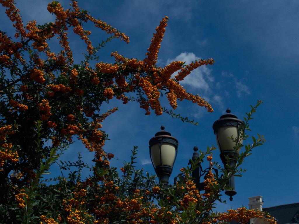 Orangefarbene Beeren gegen blauer Himmel mit 2 Lanternen in Sofia