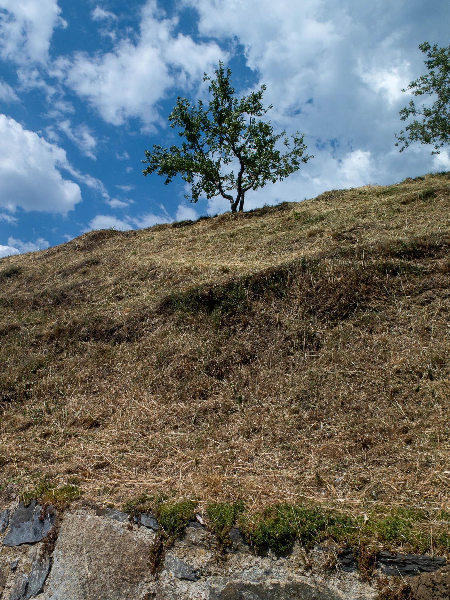 Vertrocknetes Gras auf dem Berg, oben ein Baum, blauer Himmel mit weiße Wolken