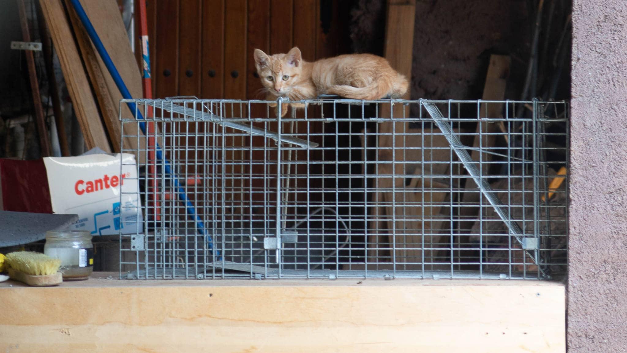 Rote junge Katze auf einem Käfig