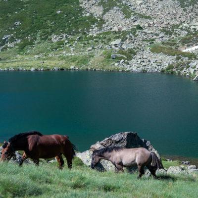 Zwei Pferde grasend am Bergsee