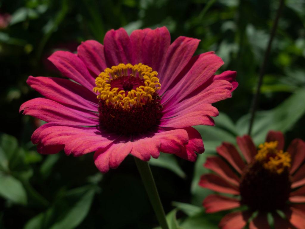 Blume nahaufname Balchik botanische garten