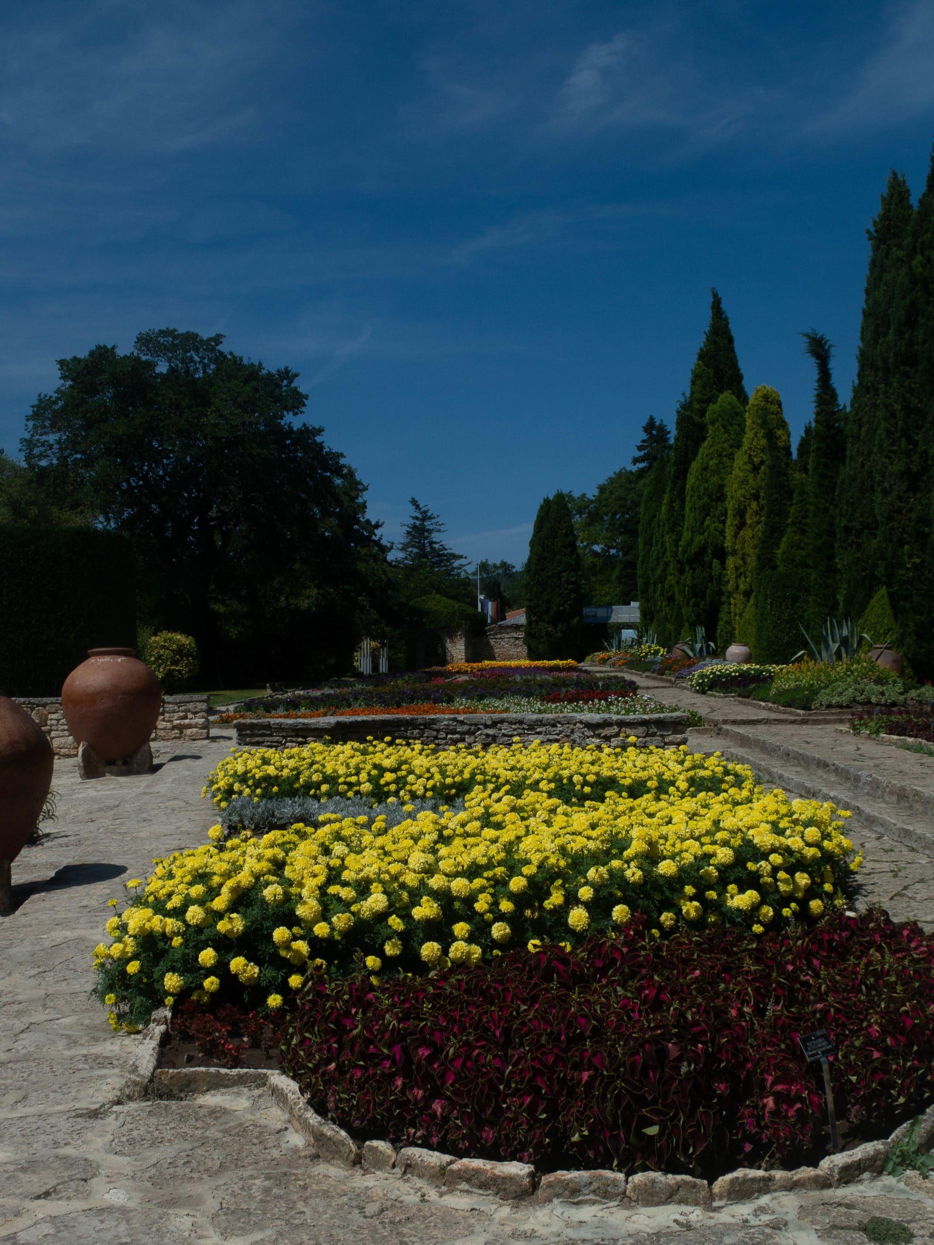 Blumenbeete botanische Garten Balchik, gelbe Blumen vorne