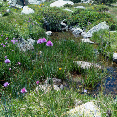 Blumen und Bächlein in den Bergen von Andorra Grandvalira