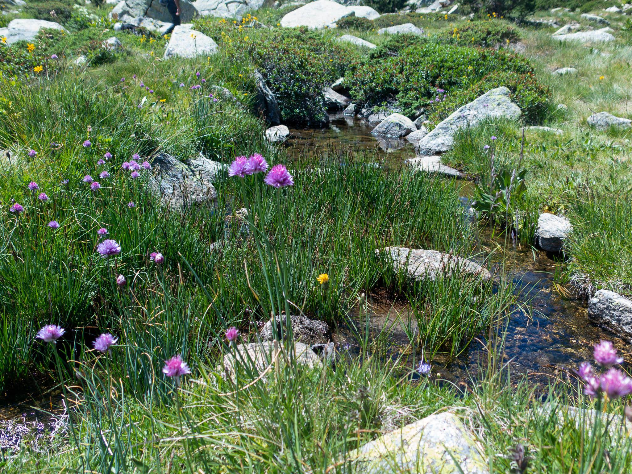 Grandvalira Blumenwiese